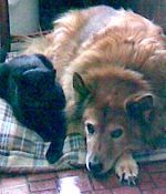 My cat and dog are buddies.